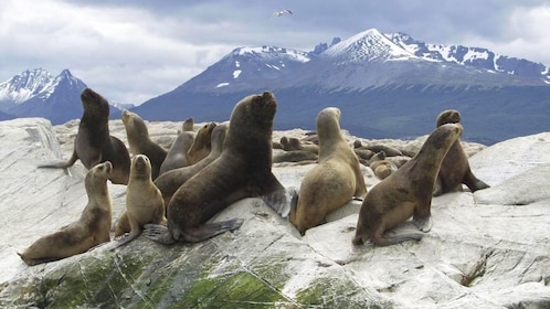 Seals perched on the rocks of Seal Island in Argentina