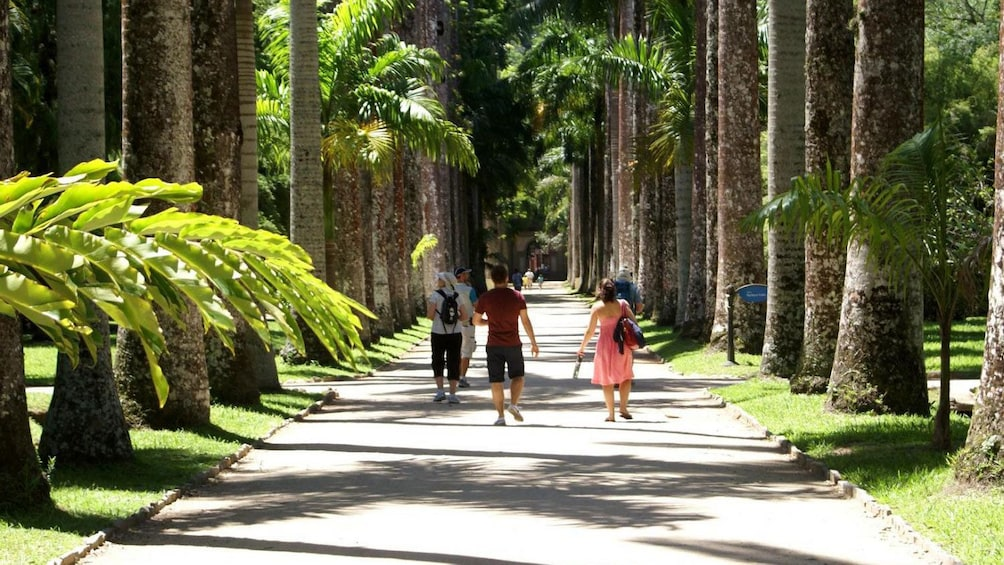 People walking down the Avenue of Royal Palms in the Botanical Garden in Rio de Janeiro