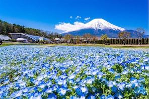 Fuji Area with Kids
