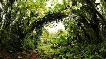 Edge Ferry to Saba Tickets & Rainforest Hike