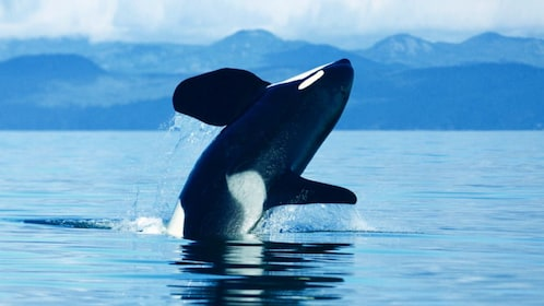 Expedia_Vancouver Orca Whale_1024x576.png