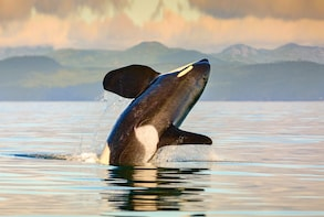 Victoria Whale Watching Adventure with Seaplane & Cruise