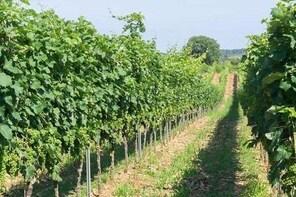 Wine tasting in Vieste