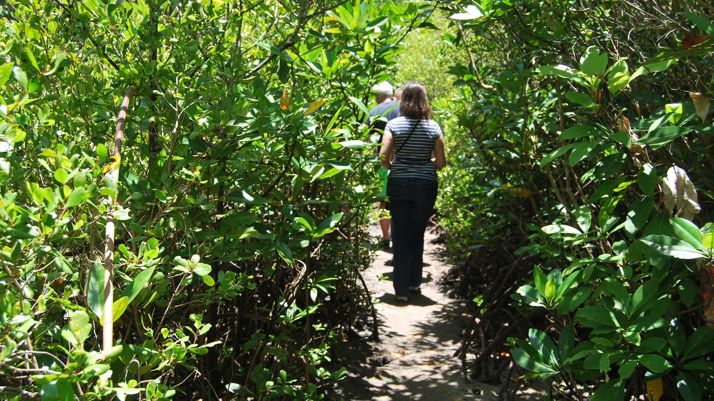 People walking on a trail on the Daintree Rainforest Tour in Cairns Australia