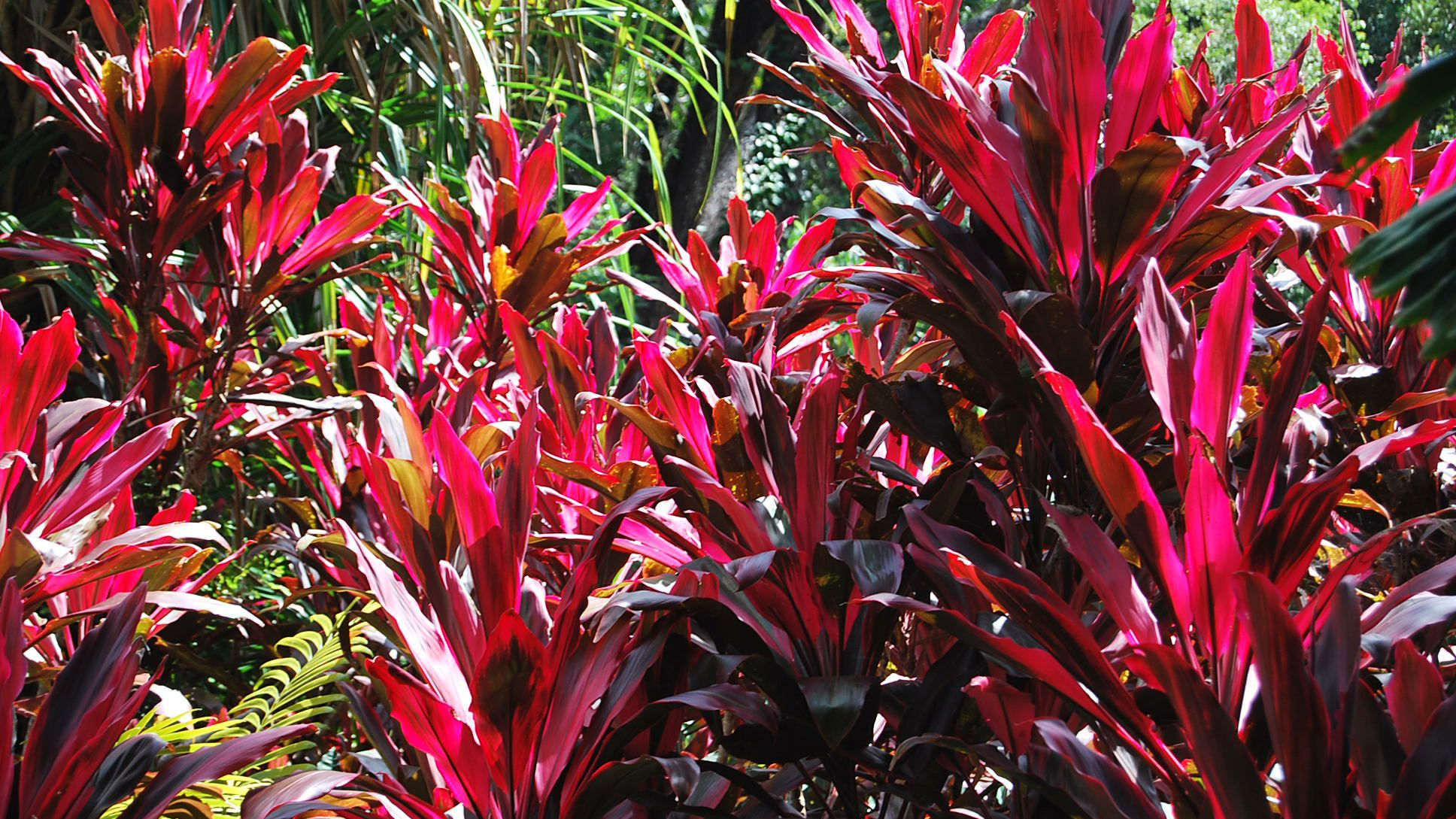Close up of plants on the Daintree Rainforest Tour in Cairns Australia