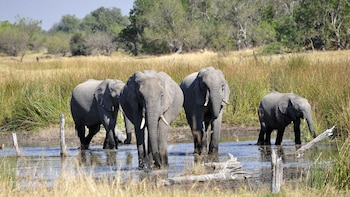 Botswana 'Wildlife Side'