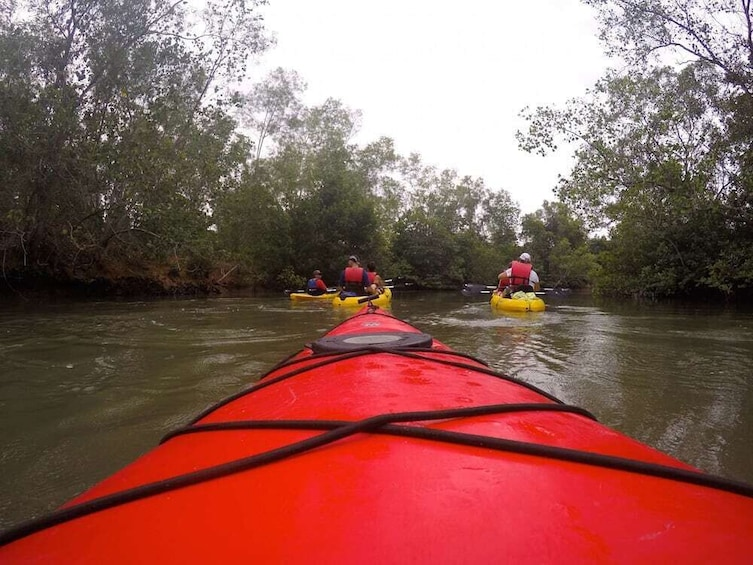 Show item 2 of 2. Nature Kayaking in Singapore