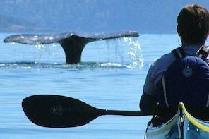 3-Hour Sea Kayak Tour in the San Juan Islands