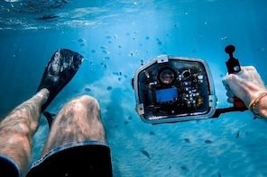 Underwater Video Snorkel w/ Seas Turtles
