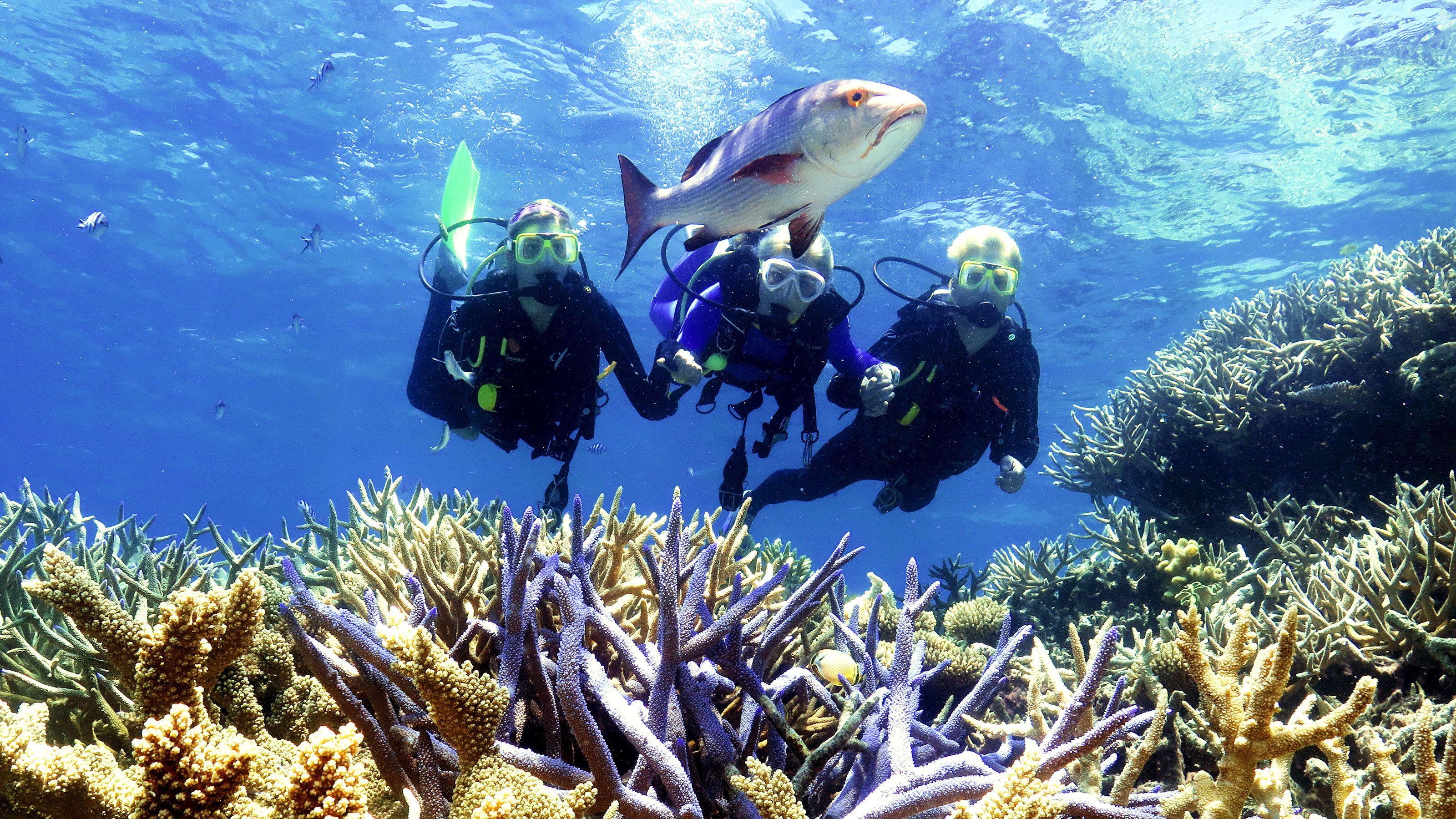 Quicksilver Great Barrier Reef Agincourt Reef Cruise