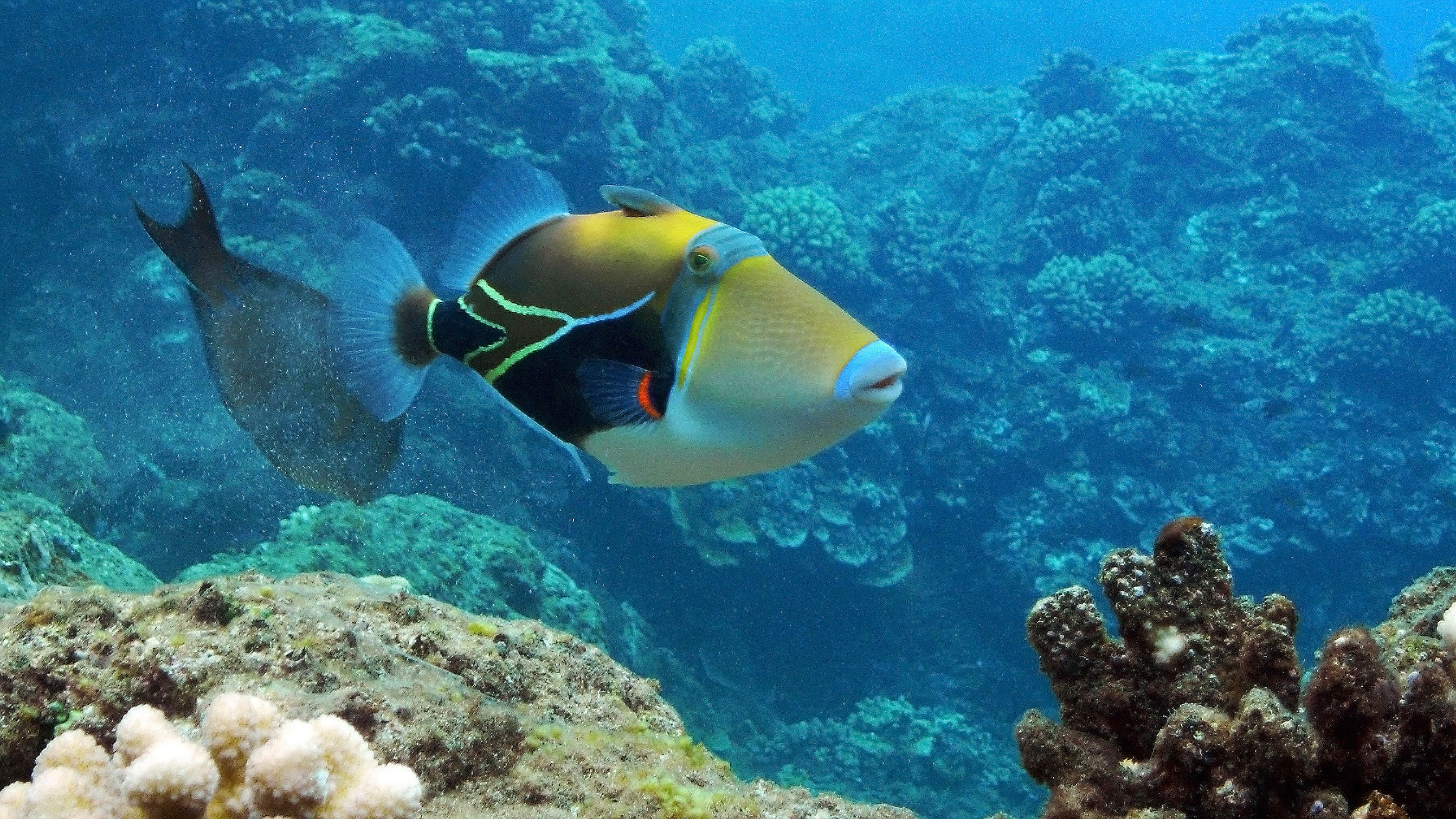 Tropical fish on the Southport Kayak, Snorkel and Fish Feeding Tour in Australia
