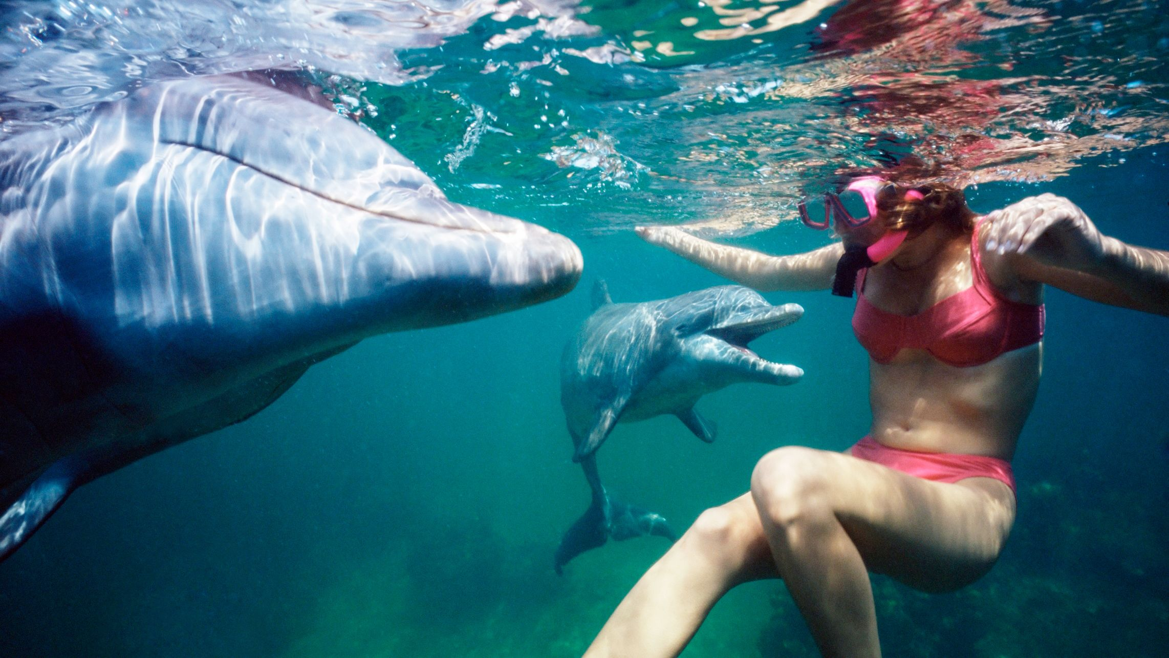 Girl snorkeling with dolphins in the Southport Kayak, Snorkel and Fish Feeding Tour in Australia