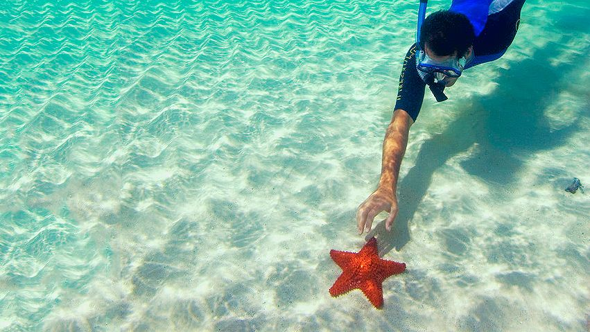Guy reaching for starfish underwater in the Southport Kayak, Snorkel and Fish Feeding Tour in Australia