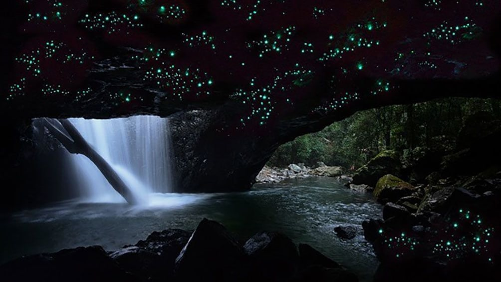 glow worms on ceiling of cave in dark forest in Gold Coast