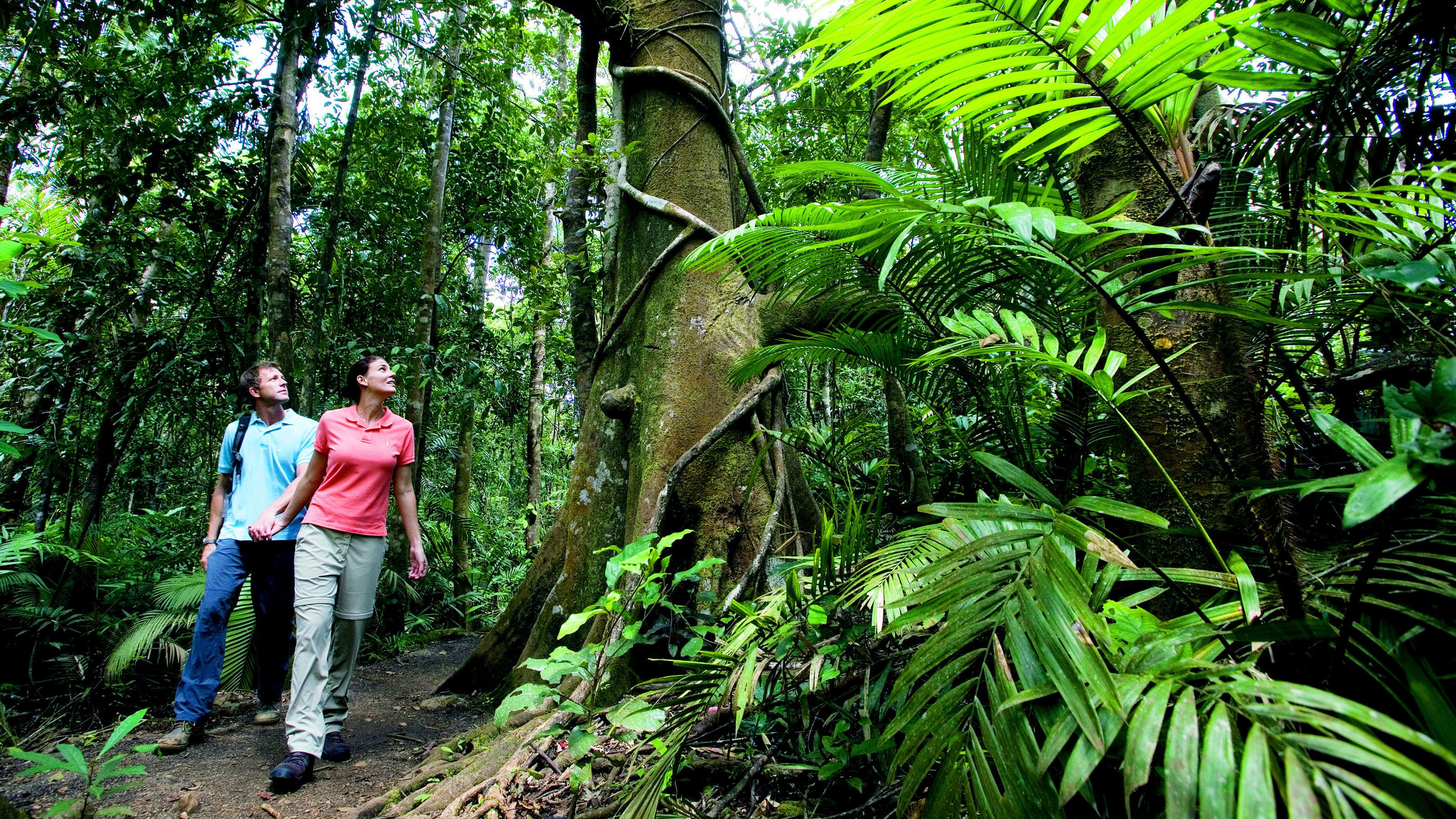 Cape Tribulation & Daintree Rainforest