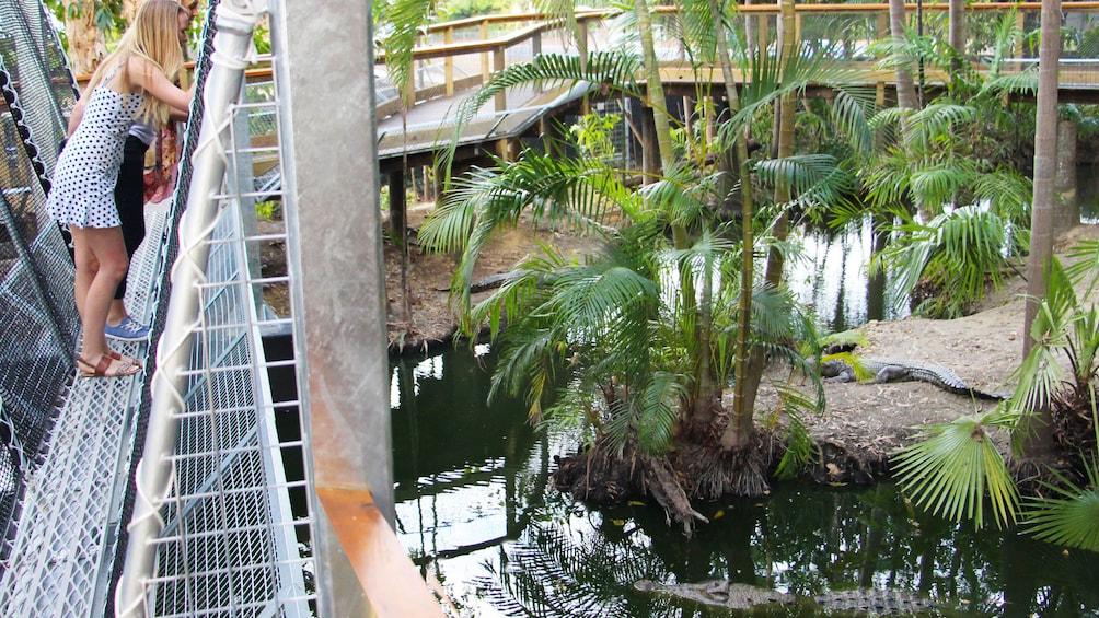 Charger l'élément 4 sur 4. Wildlife Habitat Port Douglas Admission