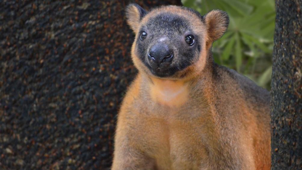 Charger l'élément 3 sur 4. Wildlife Habitat Port Douglas Admission