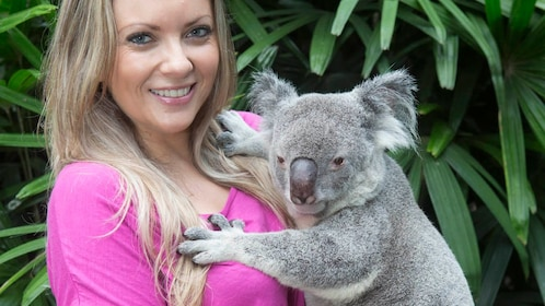 Friendly Koala being held my young woman in Cairns