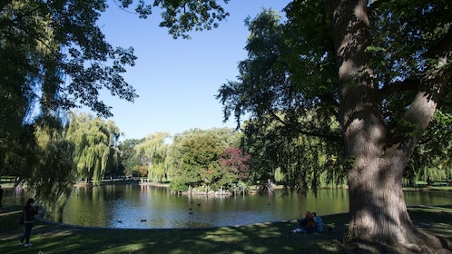 Public Garden pond as seen in Good Will Hunting in Boston