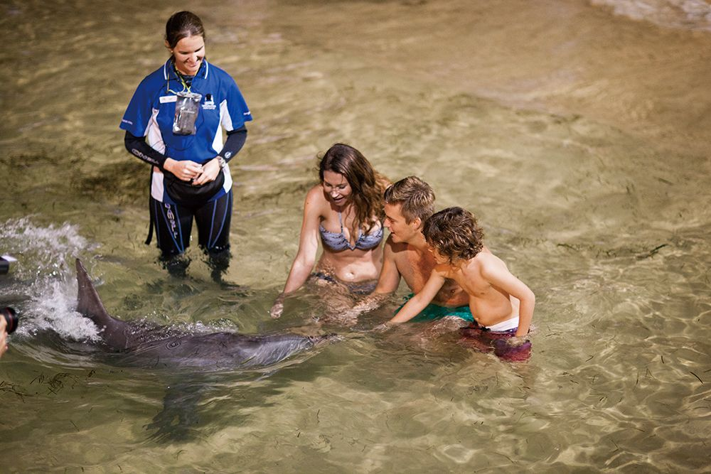 Tangalooma Premium Dolphin Feeding Adventure Day Cruise
