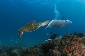 Gold Coast Try-Scuba Experience at Cook Island Aquatic Reserve