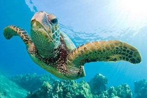 Guided Snorkel with Fish Tour at Cook Island Aquatic Reserve