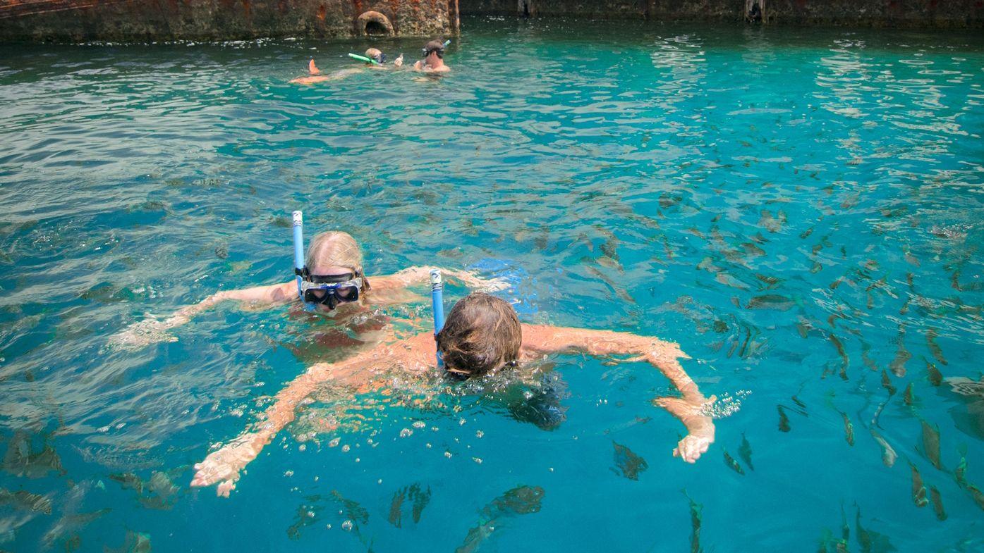 People snorkeling in Brisbane