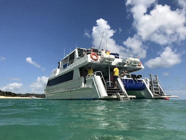 Dolphin_Wild_Island_Cruises_Moreton_Island_Expedia.jpg