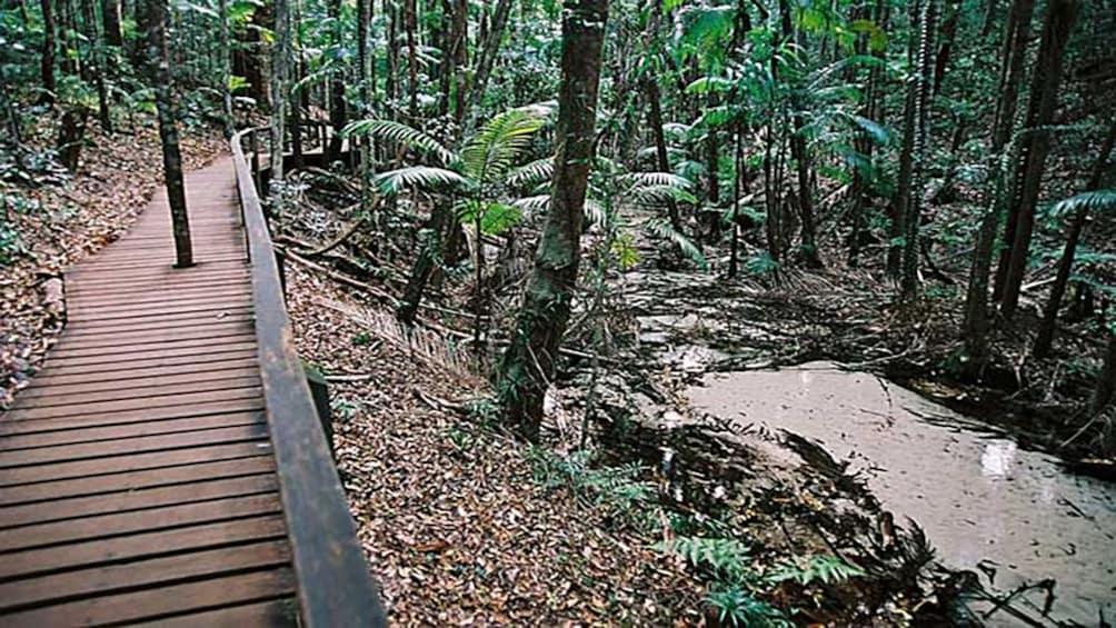 Show item 2 of 5. wooden path through rain forest in Brisbane