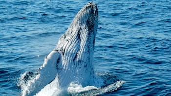 Whale Watching on Pacific Explorer