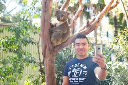 Koala selfie.jpg