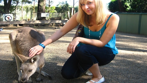 young woman pets tame kangaroo in Blue Mountains