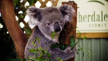 Blue Mountains Tour, Wildlife Park, Rides & River Cruise