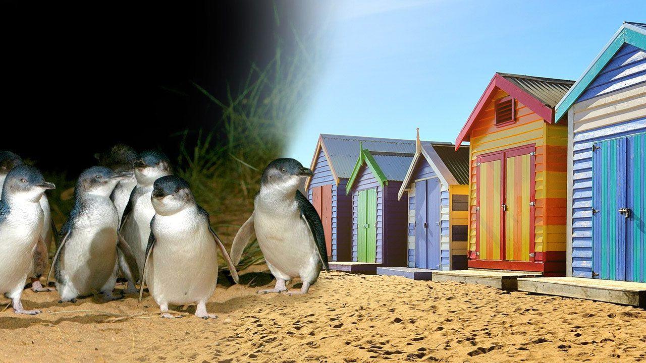 Phillip Island Penguin Parade, Moonlit Sanctuary & Seal Rocks Day Tour