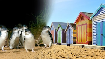 Phillip Island Penguin Parade, Moonlit Sanctuary & Seal Rocks Day Tour