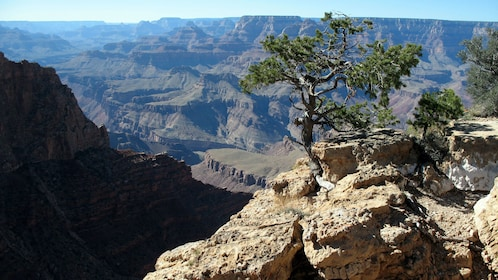 Trees grow from the Grand Canyon rock face to provide an organic touch to the desert landscape