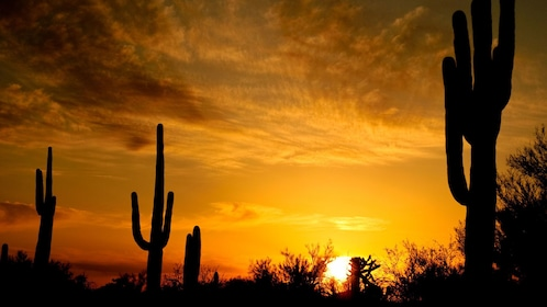 Silhouettes of cacti at sunset in Phoenix