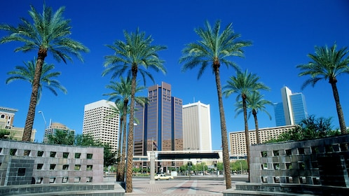 Buildings and palm trees in downtown Phoenix