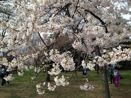 2-Day Philadelphia+Amish+Washington D.C. Cherry Blossom CB2A