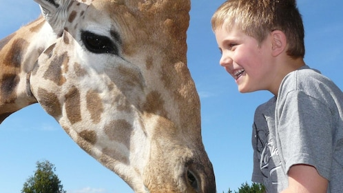 young boy next to giraffe at National Zoo & Aquarium in Canberra