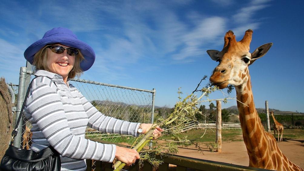 Ver elemento 1 de 5. woman feeds giraffe at National Zoo & Aquarium in Canberra
