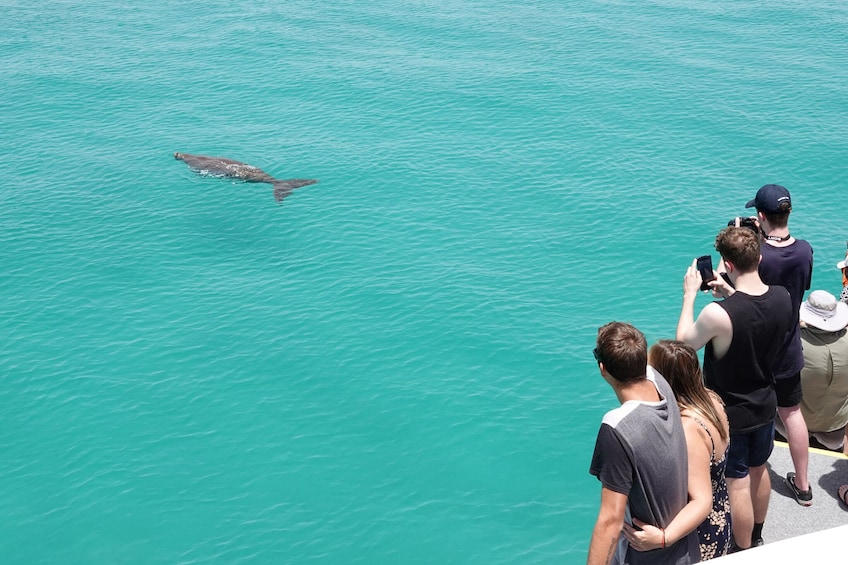 Show item 5 of 7. From Gold Coast Dolphin Watch & Tangalooma Wreck Snorkeling