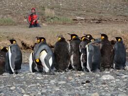 Excursion to King Penguin Park, Tierra del Fuego