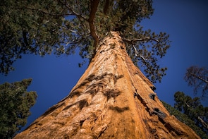 Yosemite National Park & Giant Sequoia Grove Day Tour