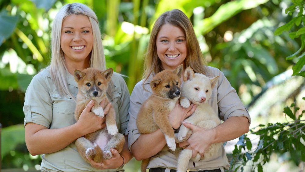 Girls holding Dingo puppies at Australia Zoo