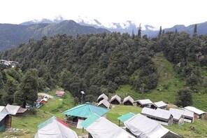 Camping in Chopta - 1 night