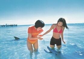 Monkey Mia Dolphin Experience