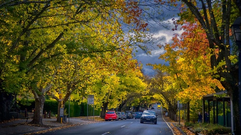 tree lined street with autumn colors in Adelaide