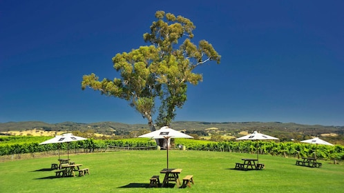 pick-nick tables under parasols in field in Adelaide
