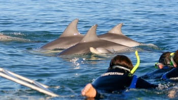 Dolphin Watching Cruise & Swimming Experience